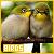 Birds: