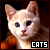 Cats & Kittens: